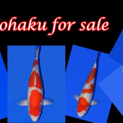 Kohaku for sale…