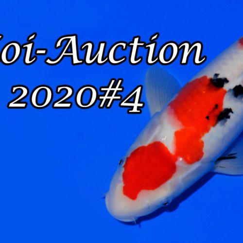 Koi-Auction 2020#4