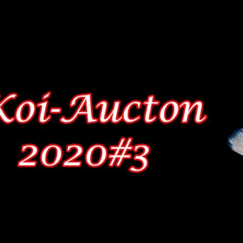 Koi-Auction 2020#3