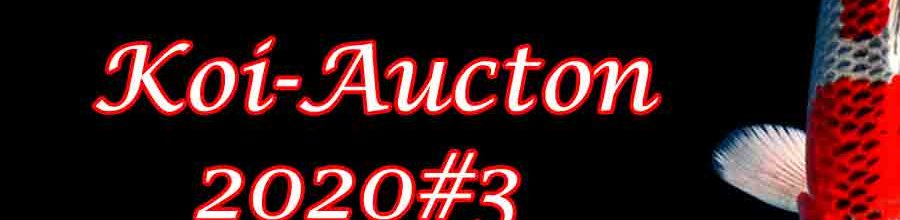 Koi-Auction 2020#3