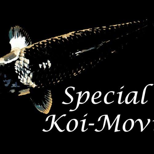 Special Koi-Movie #1