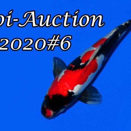 Koi-Auction 2020 #6