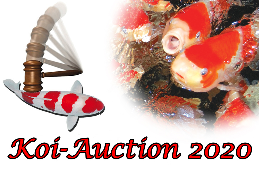 Koi_Auction_2020_tosai