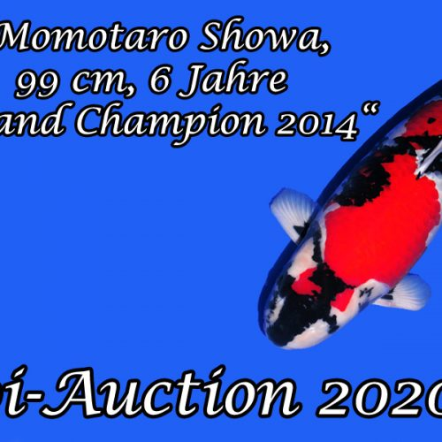 Koi-Auction 2020 #7