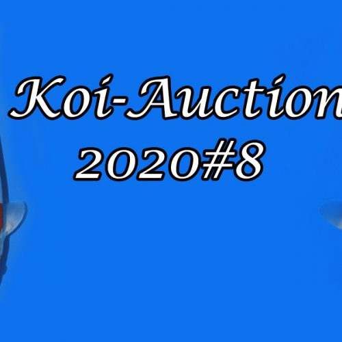 Koi-Auction 2020 #8