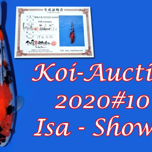 Koi-Auction 2020 #10