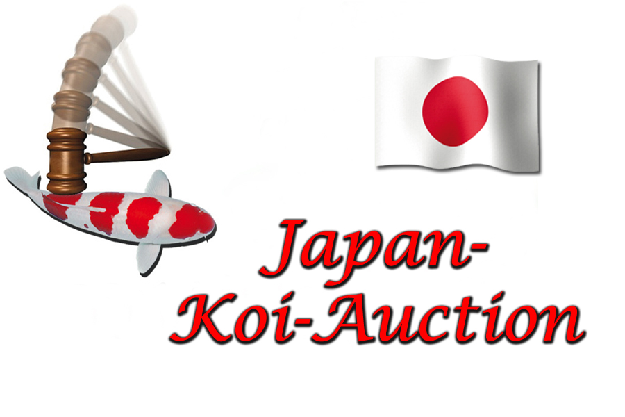 Japan_Koi-Auction