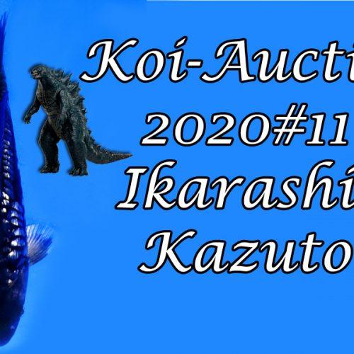 Koi Auction 2020 #11