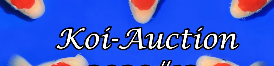Koi-Auction 2020 #12 – Nogami