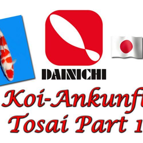 Dainichi Tosai Koi-Ankunft