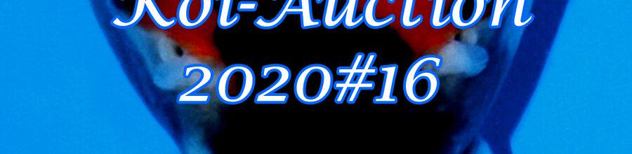 Koi-Auction 2020 #16