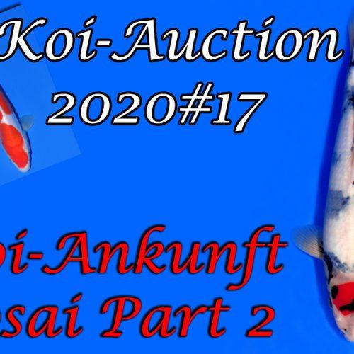 Koi Ankunft Part 2 & Koi-Auction #17