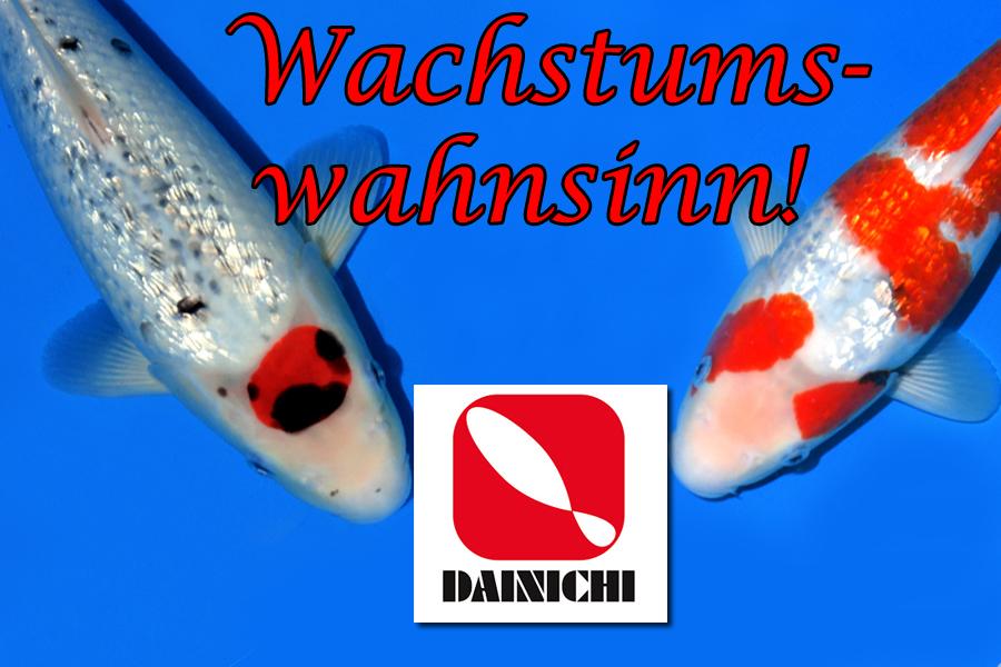 Dainichi_Wachstum