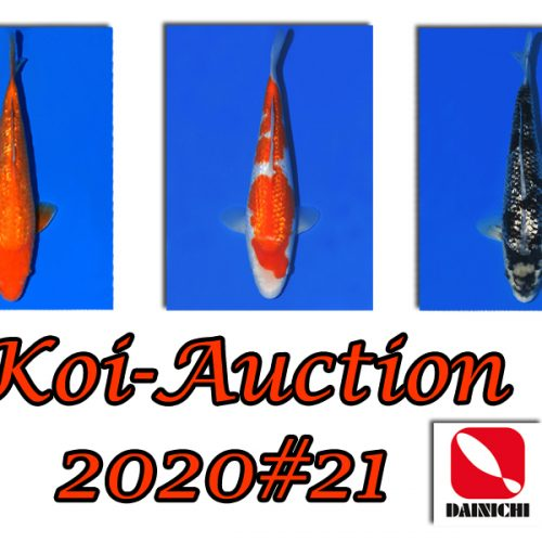 Koi-Auction 2020 #21