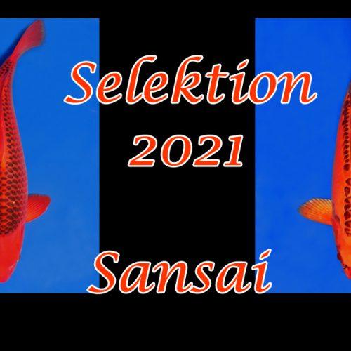 Koi-Selektion 2021 #5