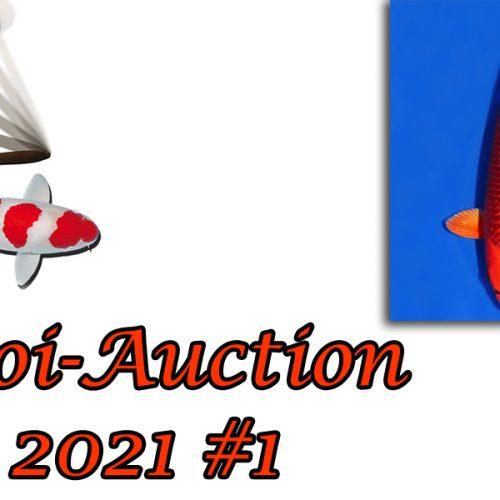 Koi-Auction 2021 #1