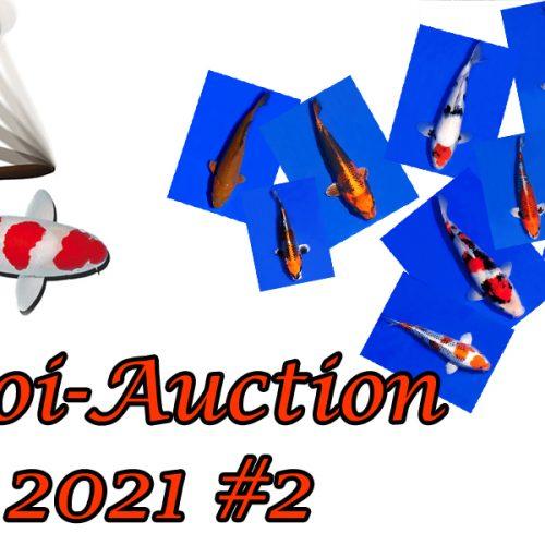 Koi-Auction 2021 #2
