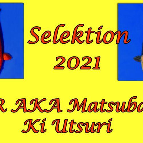 Koi-Selektion 2021 #12