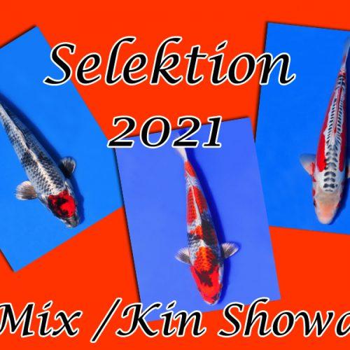 Koi-Selektion 2021 #8