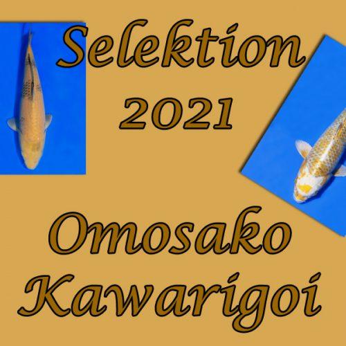 Koi-Selektion 2021 #11