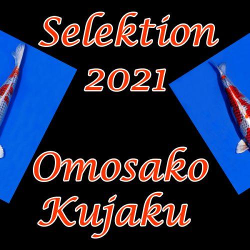 Koi-Sekektion 2021 #10