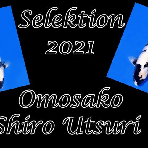 Koi-Selektion 2021 #9