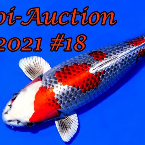 Koi-Auction #18 & Special Koi