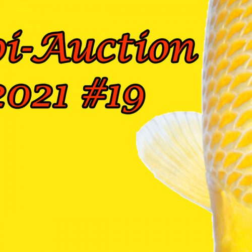 Koi-Auction #19 & Special Koi