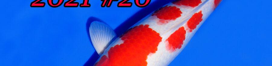 Koi-Auction #20 / Ikarashi Ozumi