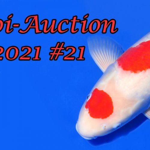Koi Auction #21   Oya & Nogami