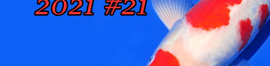 Koi Auction #21 | Oya & Nogami