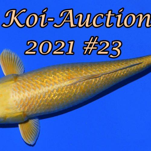 Koi Auction # 23